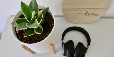 Plant and Headphones