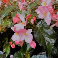 Politi garden plants